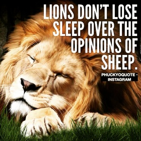 Lions Don't Lose Sleep